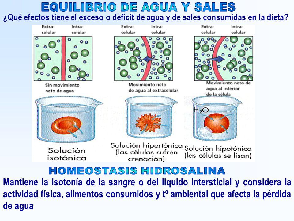 EQUILIBRIO DE AGUA Y SALES