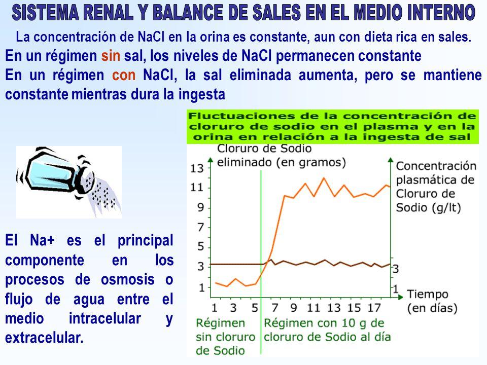 SISTEMA RENAL Y BALANCE DE SALES EN EL MEDIO INTERNO