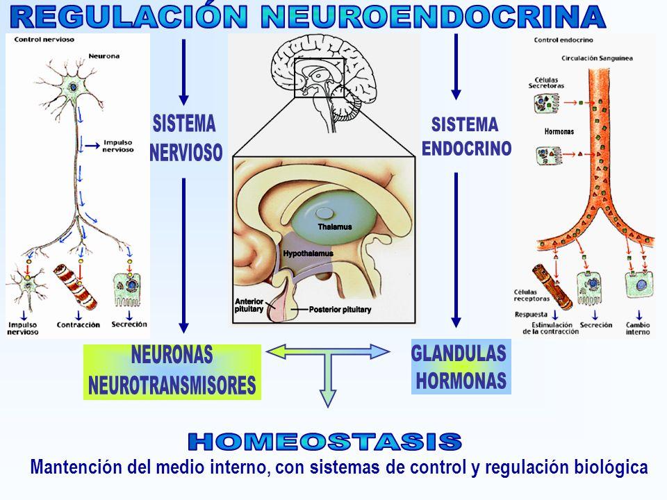 REGULACIÓN NEUROENDOCRINA