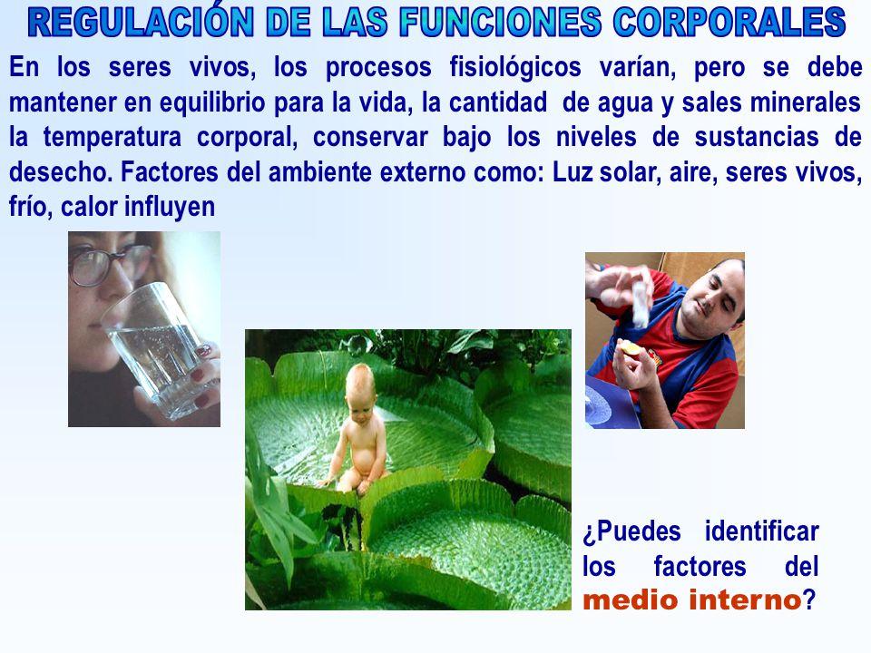 REGULACIÓN DE LAS FUNCIONES CORPORALES