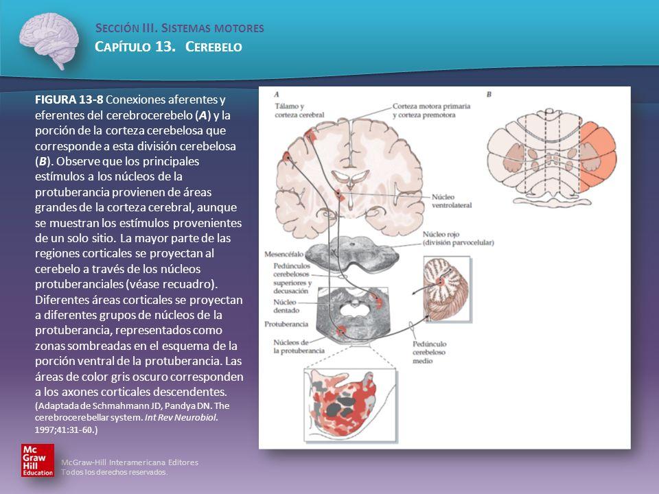FIGURA 13-8 Conexiones aferentes y eferentes del cerebrocerebelo (A) y la porción de la corteza cerebelosa que corresponde a esta división cerebelosa (B).