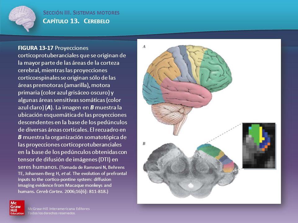 FIGURA 13-17 Proyecciones corticoprotuberanciales que se originan de la mayor parte de las áreas de la corteza cerebral, mientras las proyecciones corticoespinales se originan sólo de las áreas premotoras (amarilla), motora primaria (color azul grisáceo oscuro) y algunas áreas sensitivas somáticas (color azul claro) (A).