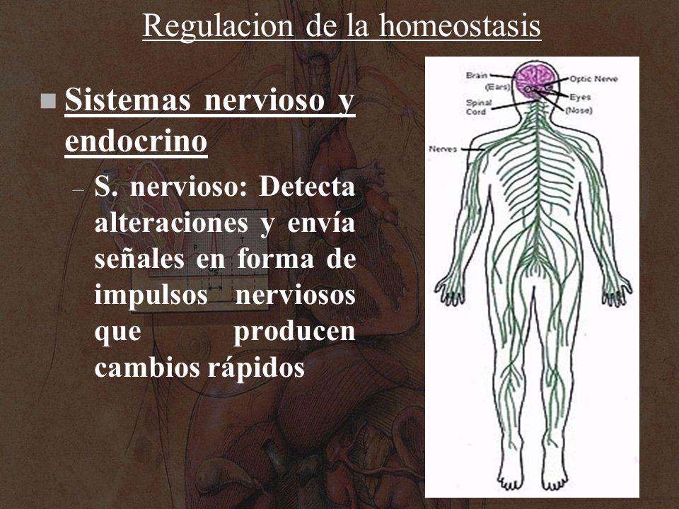 Regulacion de la homeostasis