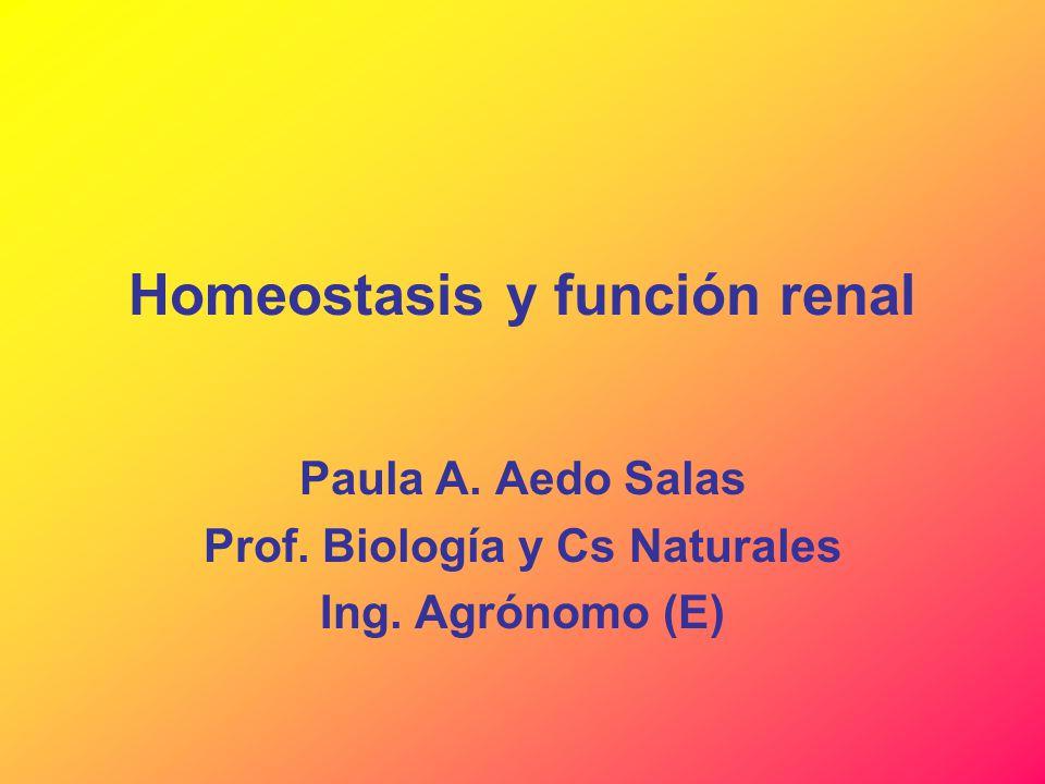 Homeostasis y función renal