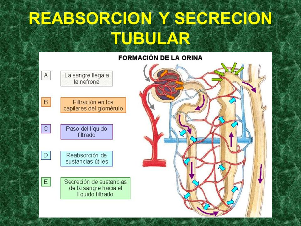 REABSORCION Y SECRECION TUBULAR