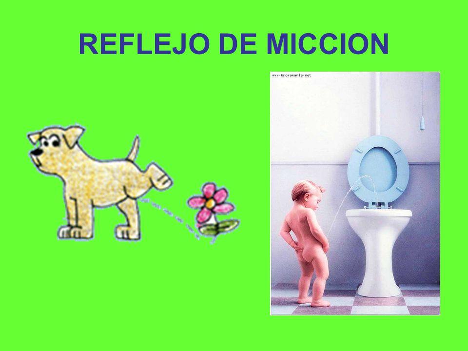 REFLEJO DE MICCION