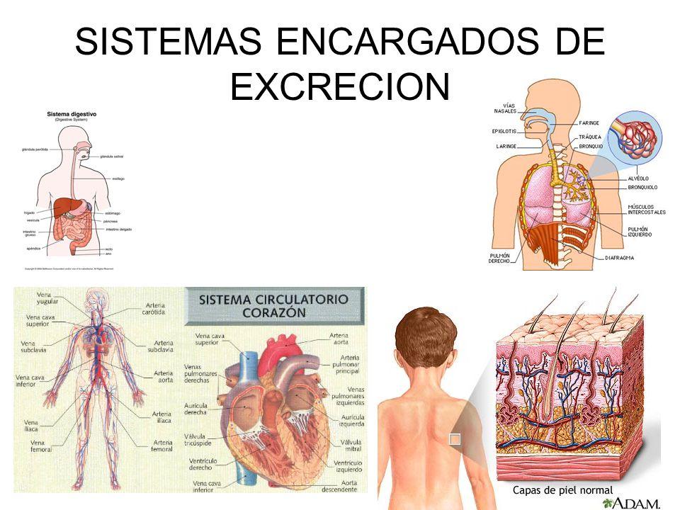 SISTEMAS ENCARGADOS DE EXCRECION