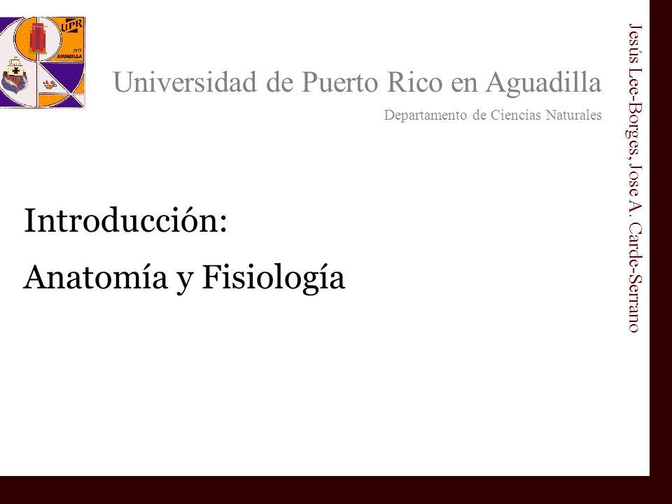 Introducción: Anatomía y Fisiología