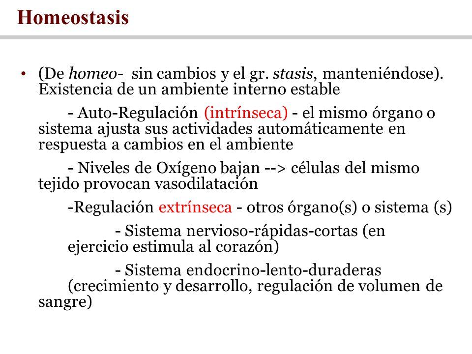 Homeostasis (De homeo- sin cambios y el gr. stasis, manteniéndose). Existencia de un ambiente interno estable.