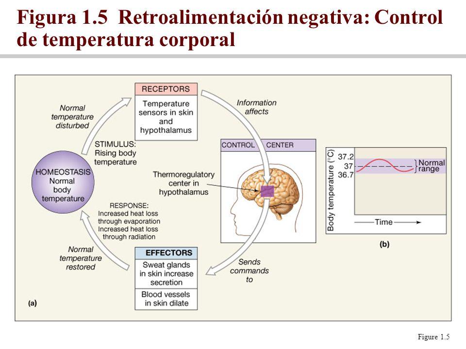 Figura 1.5 Retroalimentación negativa: Control de temperatura corporal