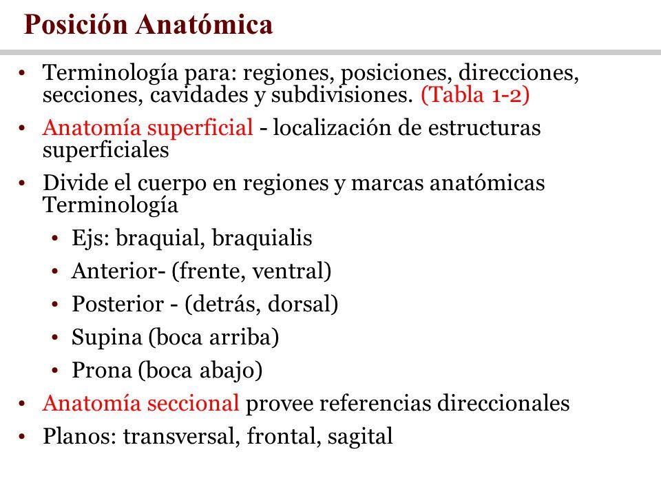 Posición Anatómica Terminología para: regiones, posiciones, direcciones, secciones, cavidades y subdivisiones. (Tabla 1-2)