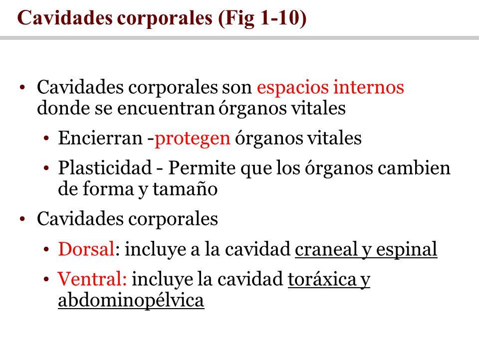 Cavidades corporales (Fig 1-10)