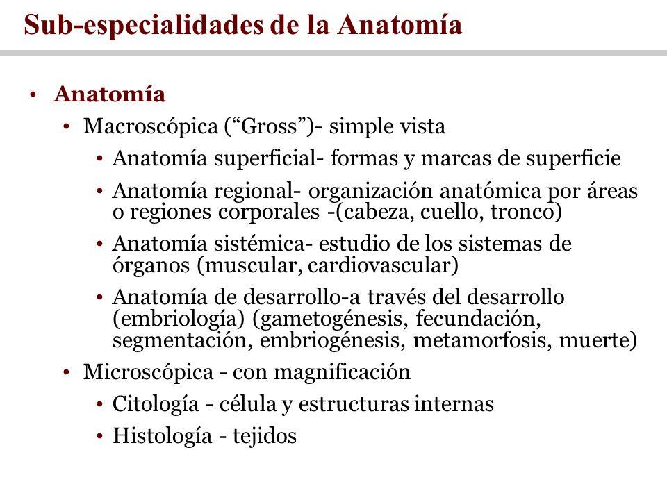 Sub-especialidades de la Anatomía