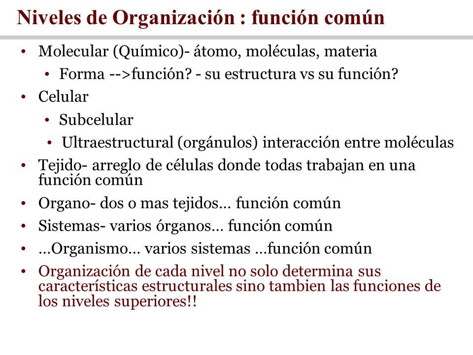 Niveles de Organización : función común