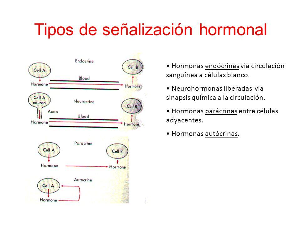 Tipos de señalización hormonal