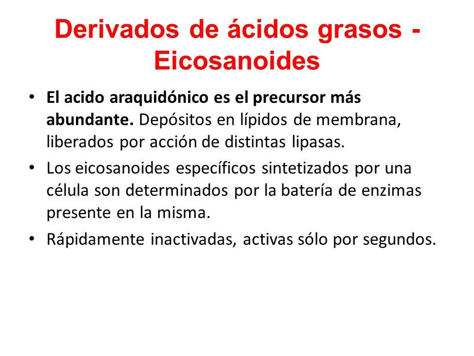 Derivados de ácidos grasos - Eicosanoides