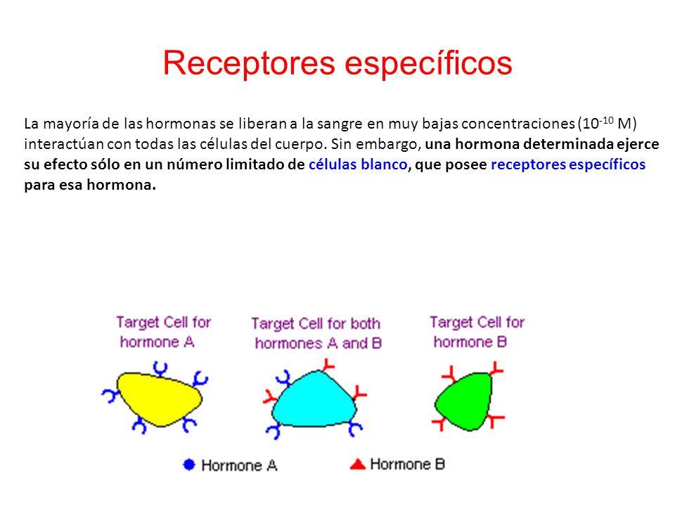 Receptores específicos