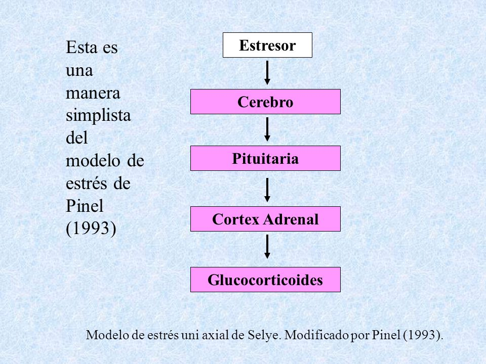 Esta es una manera simplista del modelo de estrés de Pinel (1993)
