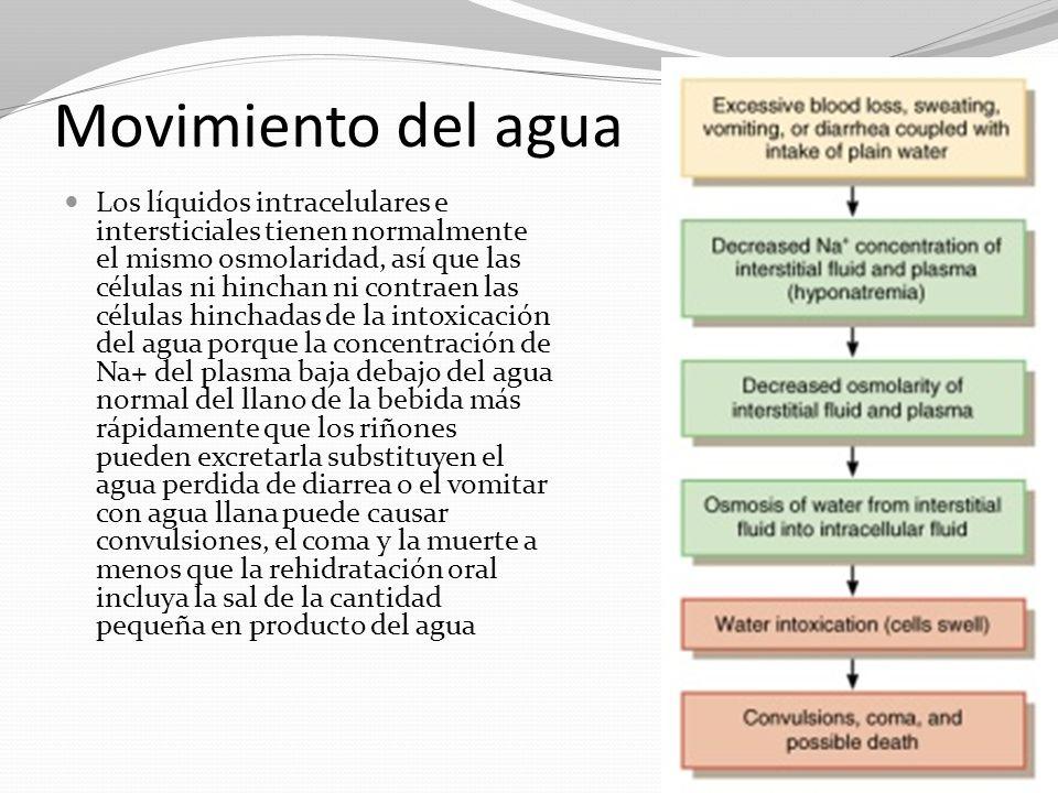 Movimiento del agua
