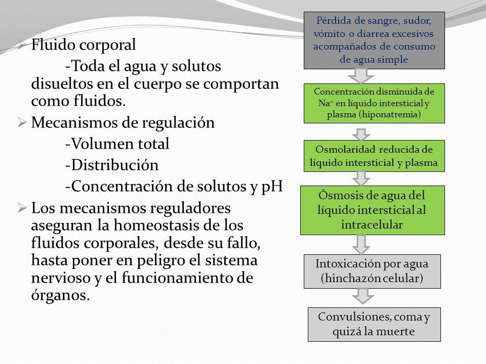 Mecanismos de regulación -Volumen total -Distribución