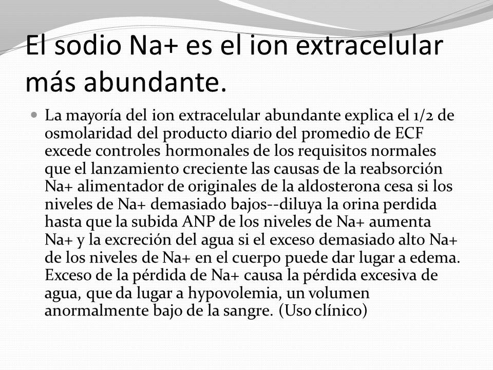El sodio Na+ es el ion extracelular más abundante.