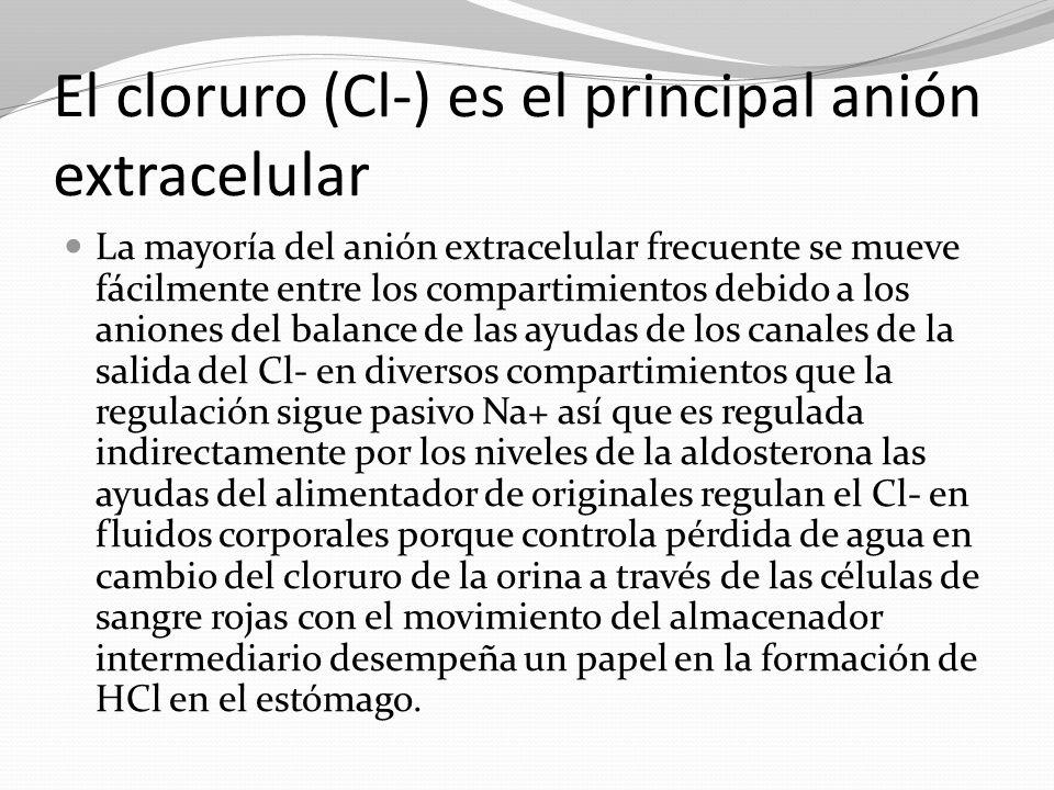 El cloruro (Cl-) es el principal anión extracelular