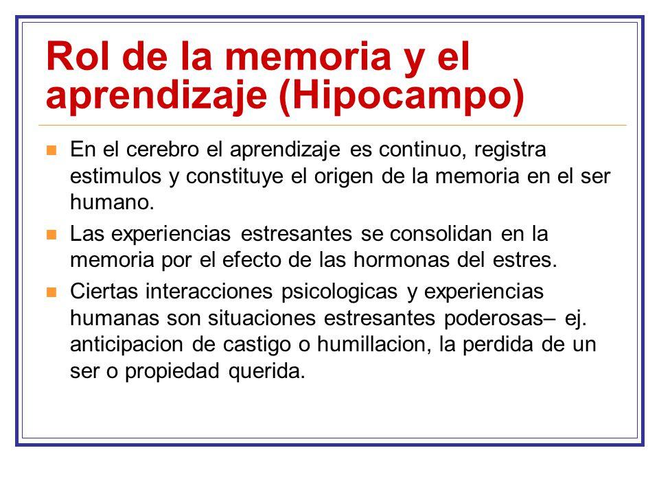 Rol de la memoria y el aprendizaje (Hipocampo)