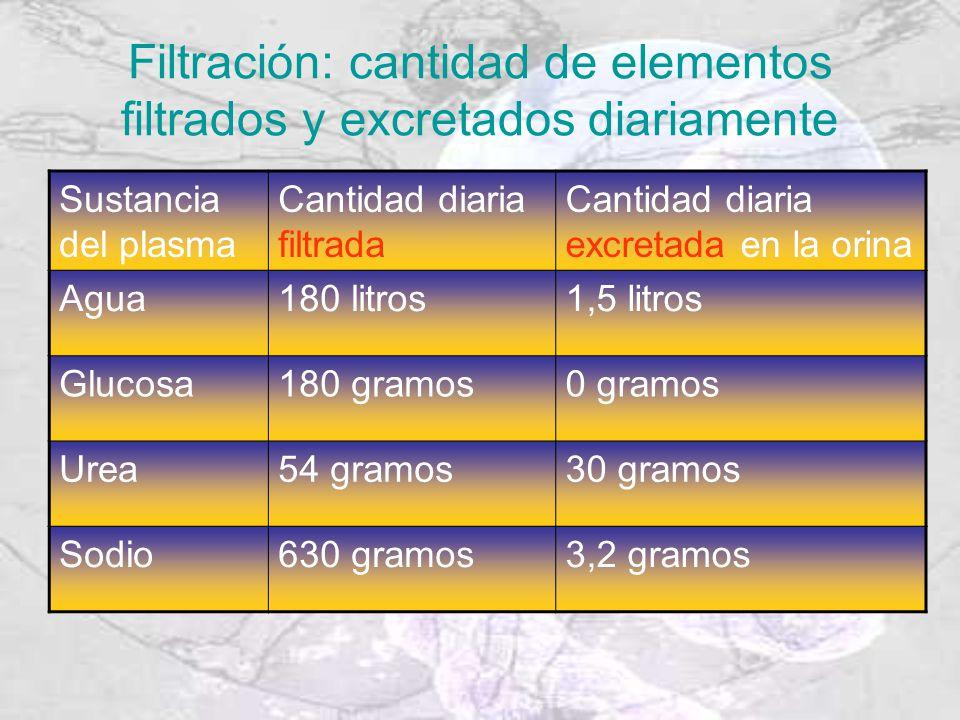 Filtración: cantidad de elementos filtrados y excretados diariamente