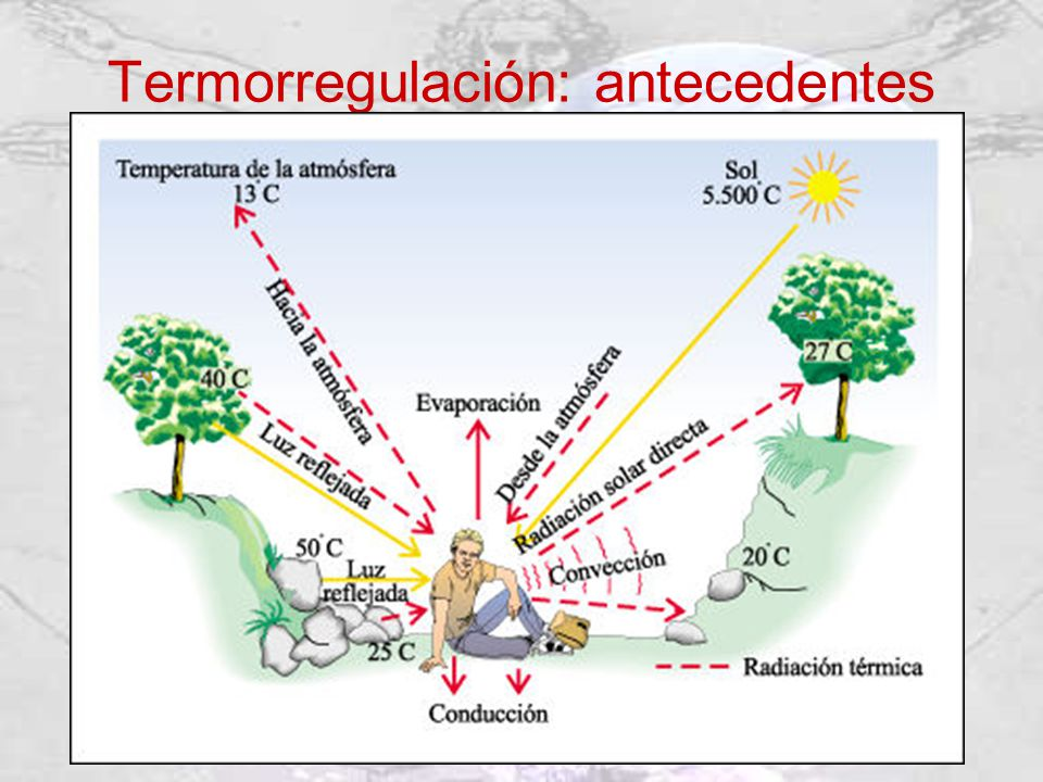 Termorregulación: antecedentes