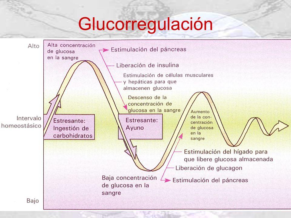 Glucorregulación