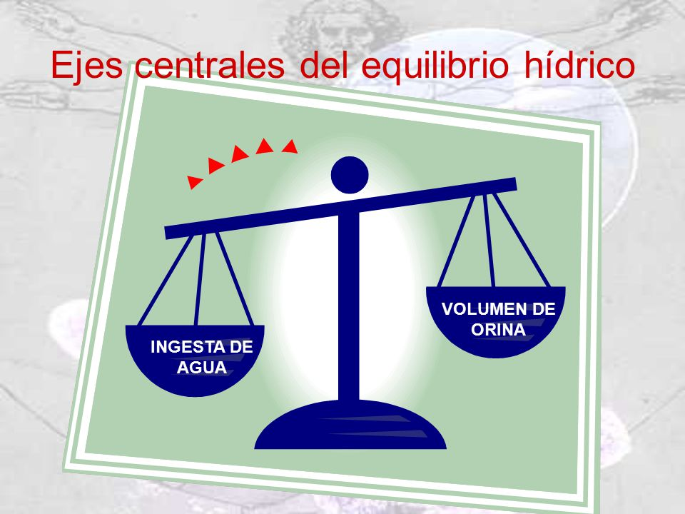 Ejes centrales del equilibrio hídrico