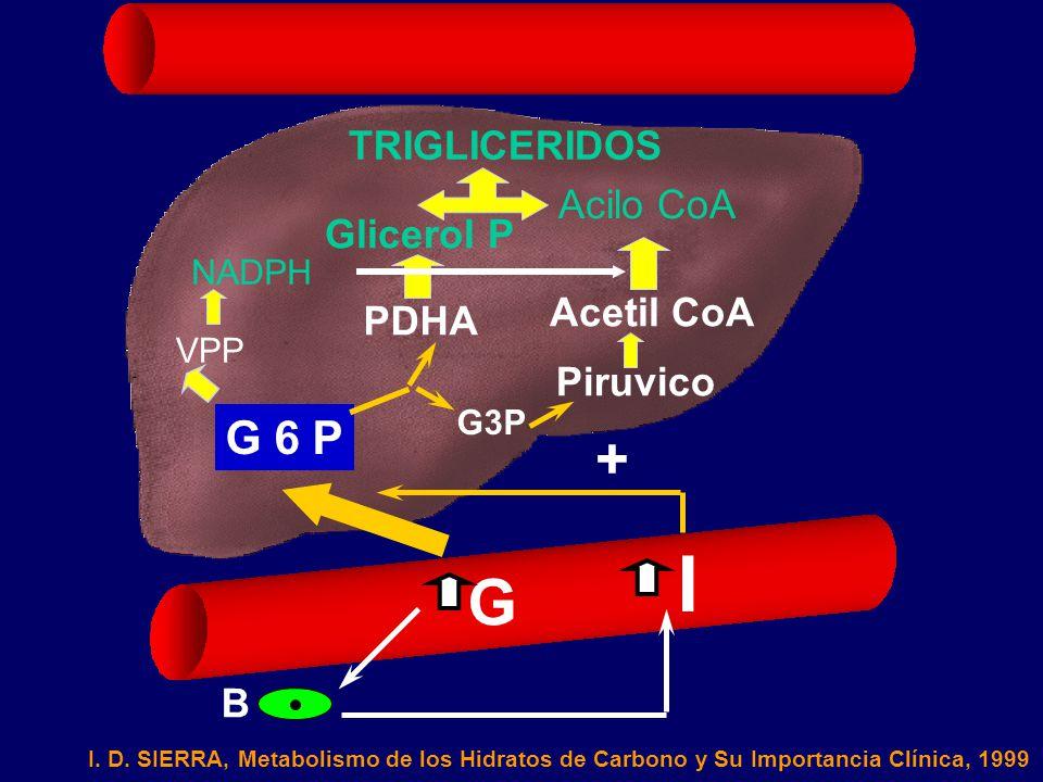 I G + G 6 P TRIGLICERIDOS Acilo CoA Glicerol P Acetil CoA PDHA