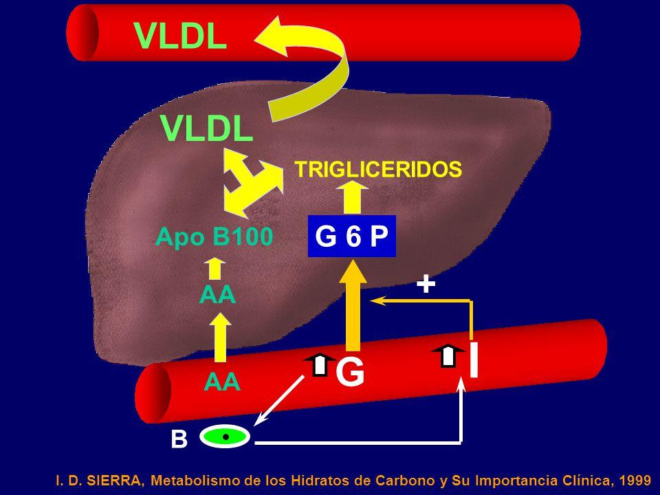 I G VLDL VLDL + G 6 P Apo B100 AA AA B TRIGLICERIDOS