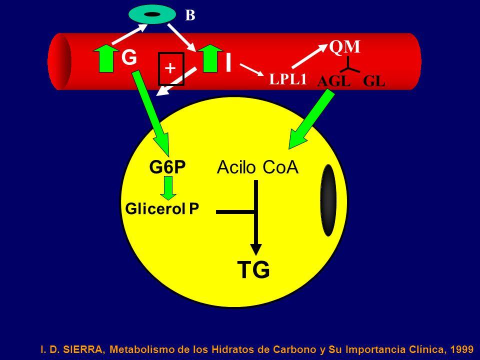 I TG G + QM G6P Acilo CoA B LPL1 AGL GL Glicerol P