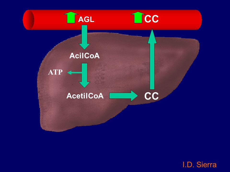 CC AGL AcilCoA ATP AcetilCoA CC I.D. Sierra