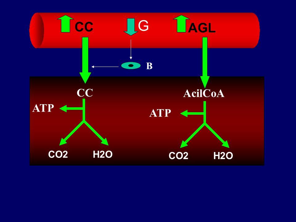 G CC AGL B CC AcilCoA ATP ATP CO2 H2O CO2 H2O