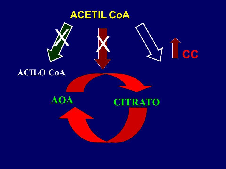 ACETIL CoA X X CC ACILO CoA AOA CITRATO