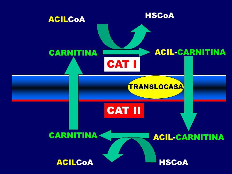 CAT I CAT II HSCoA ACILCoA CARNITINA ACIL-CARNITINA CARNITINA