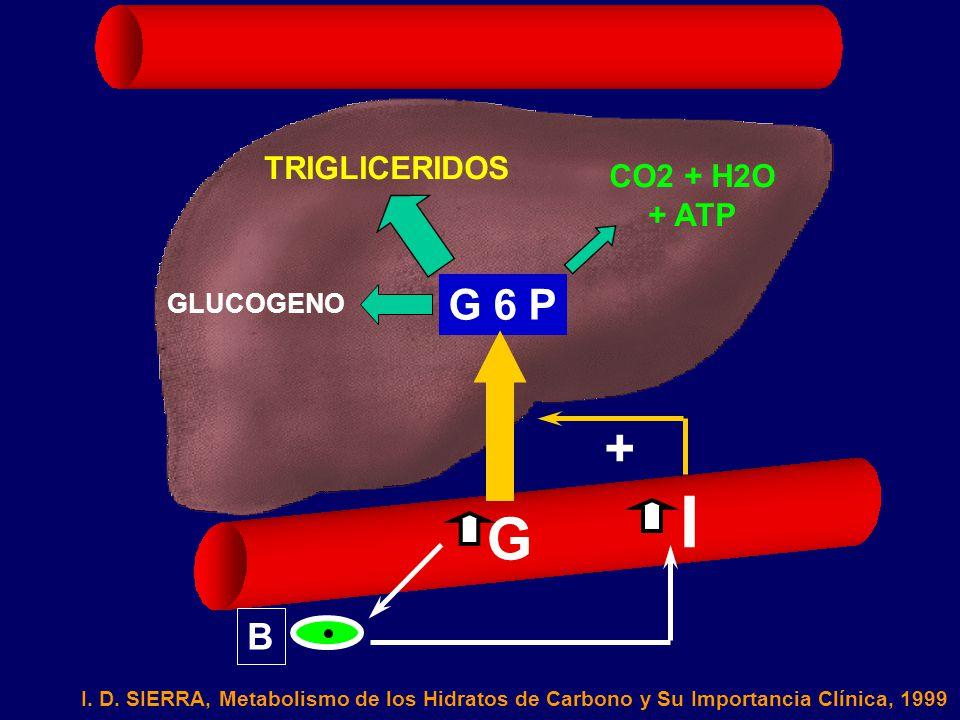 I G + G 6 P B TRIGLICERIDOS CO2 + H2O + ATP GLUCOGENO