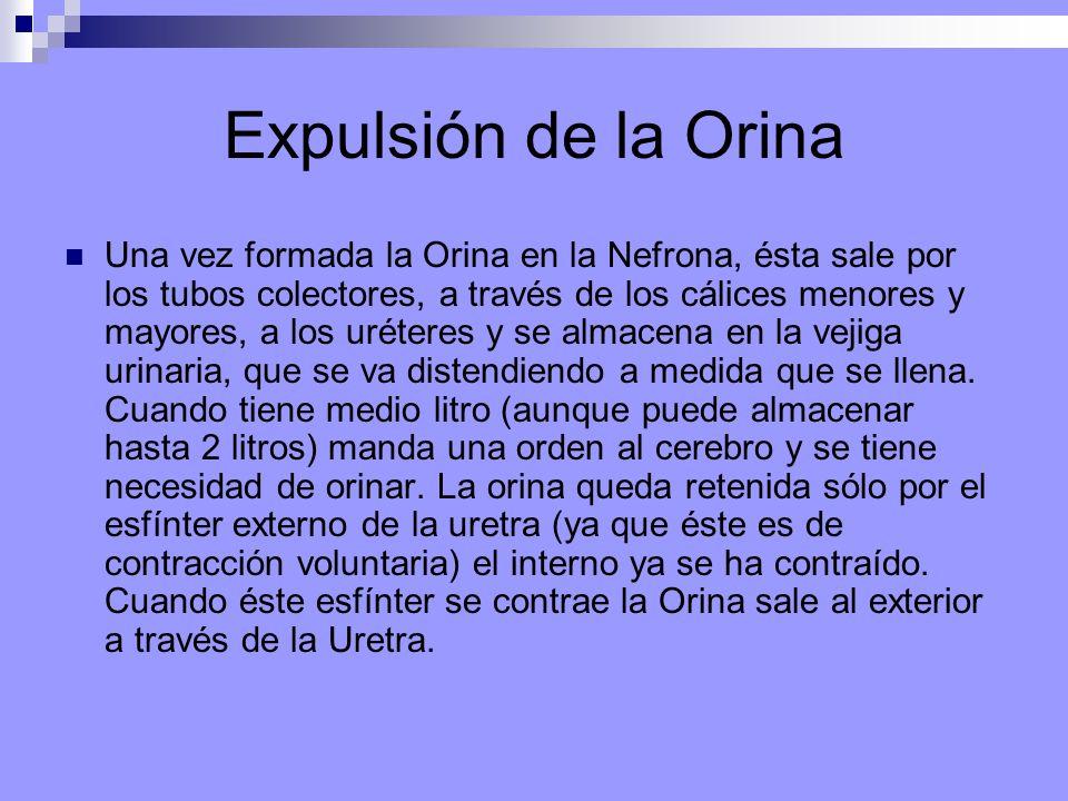 Expulsión de la Orina