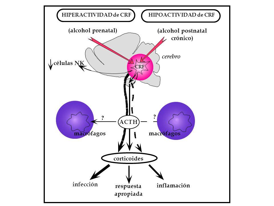 (alcohol prenatal) (alcohol postnatal crónico) células NK