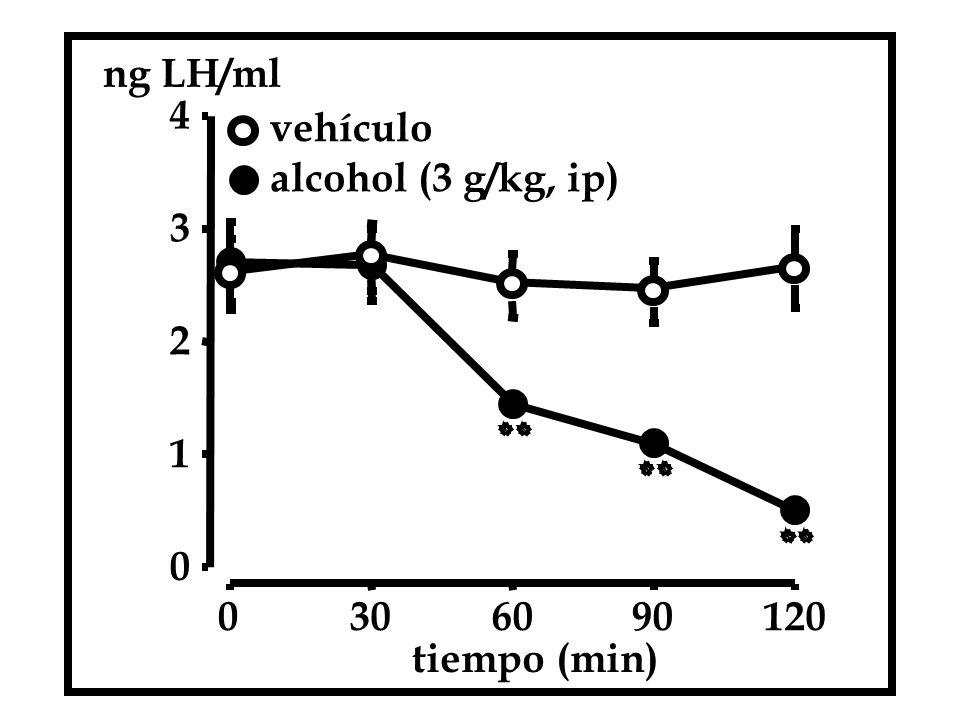 ng LH/ml 4 vehículo alcohol (3 g/kg, ip) 3 2 1 30 60 90 120