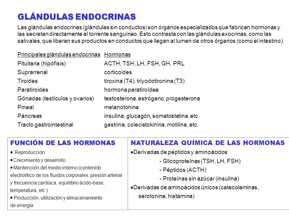 LAS GLÁNDULAS ENDOCRINAS NATURALEZA QUÍMICA DE LAS HORMONAS