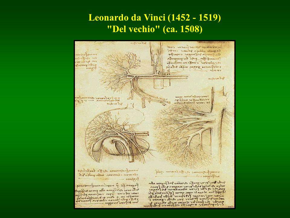 Leonardo da Vinci (1452 - 1519) Del vechio (ca. 1508)