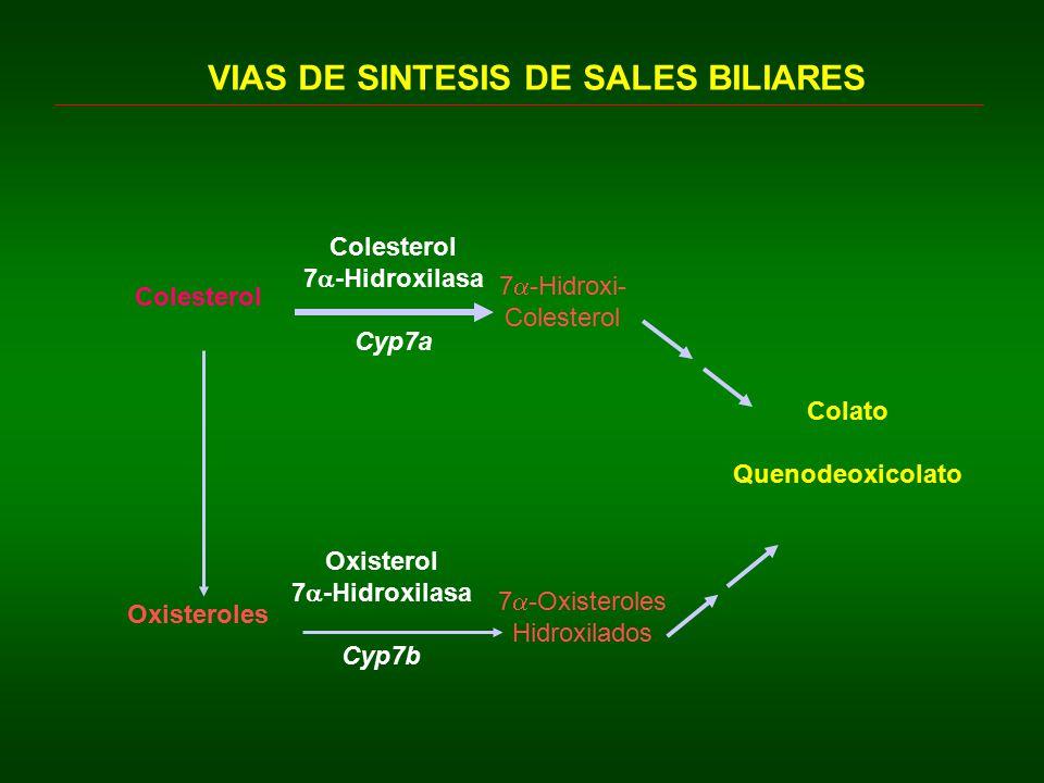 VIAS DE SINTESIS DE SALES BILIARES