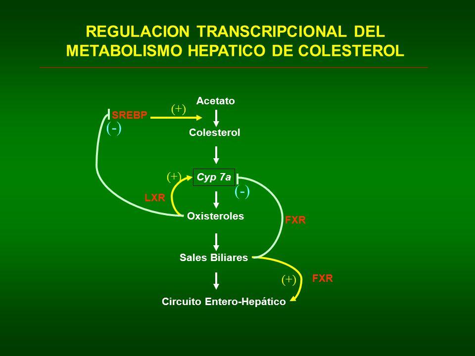 REGULACION TRANSCRIPCIONAL DEL METABOLISMO HEPATICO DE COLESTEROL