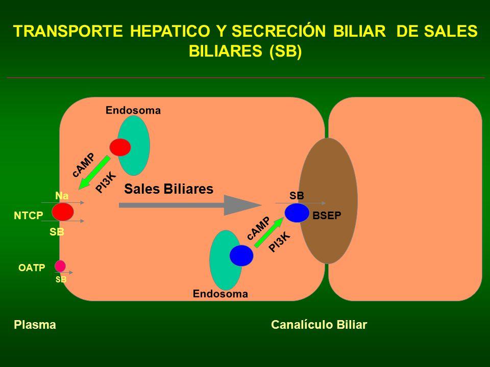 TRANSPORTE HEPATICO Y SECRECIÓN BILIAR DE SALES BILIARES (SB)