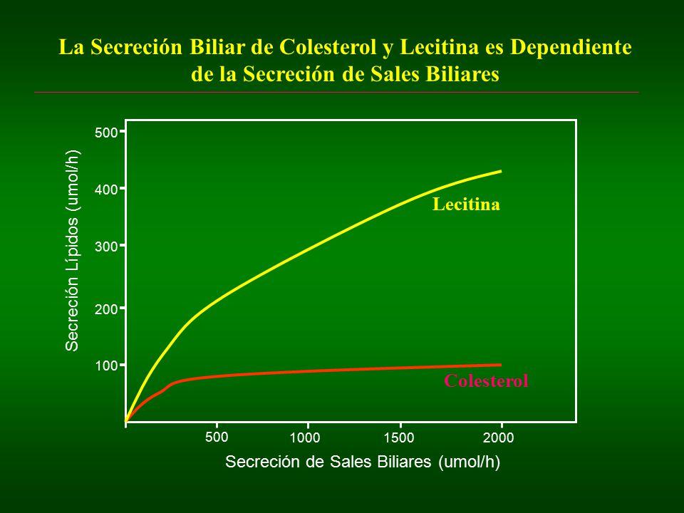 La Secreción Biliar de Colesterol y Lecitina es Dependiente de la Secreción de Sales Biliares
