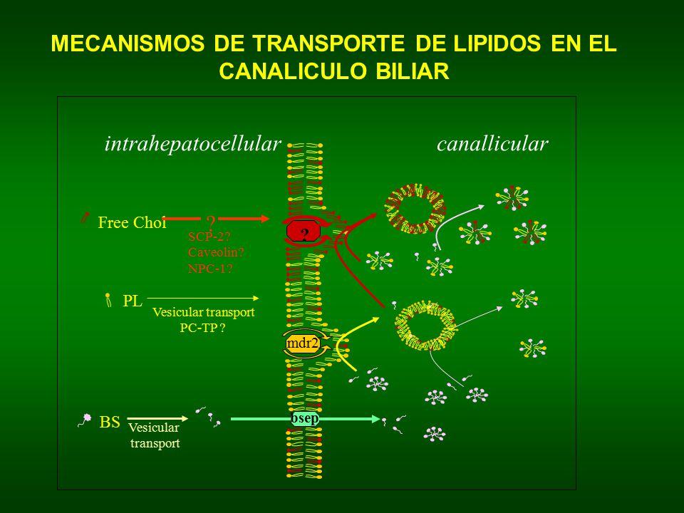 MECANISMOS DE TRANSPORTE DE LIPIDOS EN EL CANALICULO BILIAR
