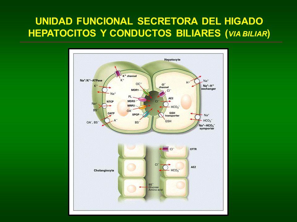 UNIDAD FUNCIONAL SECRETORA DEL HIGADO